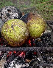 Roasting Breadfruit, a Caribbean people past time especially during summer holiday